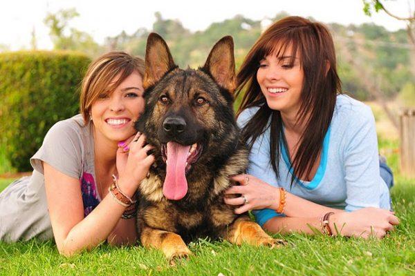 10 curiosità che forse non conosci sui cani