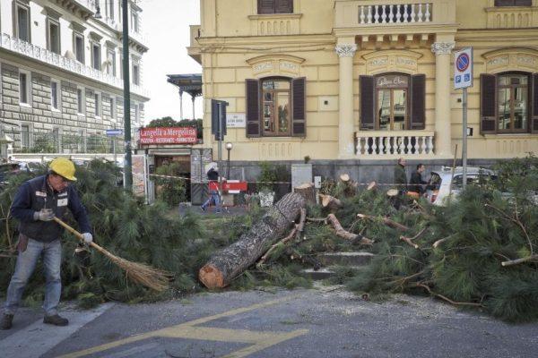 La guerra ai pini del Comune di Napoli