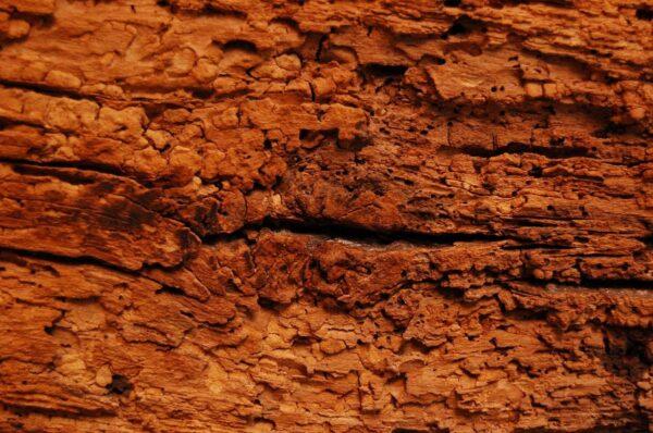 Disinfestazione termiti: come intervenire correttamente